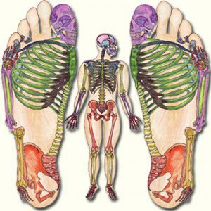 Texas massage 12 hr ceu 55 tx dshs licensed online ceu provider according to chinese medicine the sensory nerves of the internal organs that spread throughout the body are mainly gathered around the soles of the feet ccuart Image collections